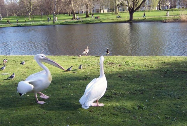 Saint James's Park, London, United Kingdom