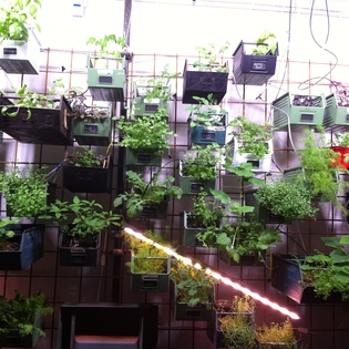 InFarm - Indoor Urban Farming GmbH, Berlin, Germany