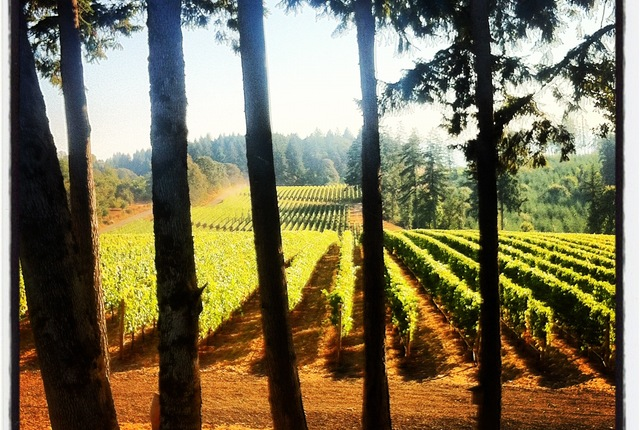 Vista Hills Vineyard, Dayton, Oregon