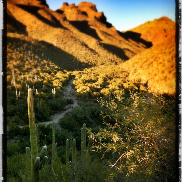 Bear Canyon, Santa Catalina Mountains, Tucson, Arizona