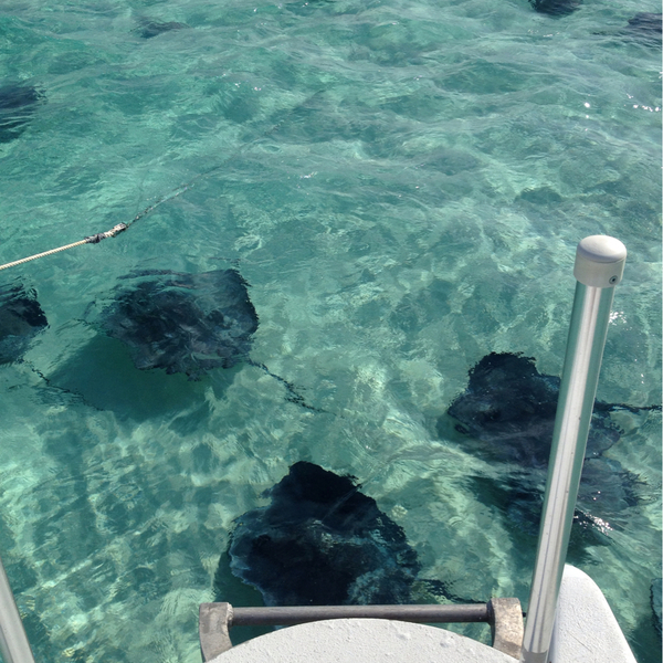 Stingray City, Rum Point, Cayman Islands