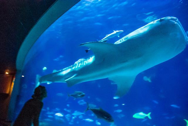 National Museum of Marine Biology and Aquarium - Checheng Township ...