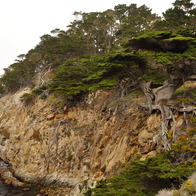 Point Lobos, Carmel, California