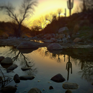 Catalina State Park, Tucson, Arizona
