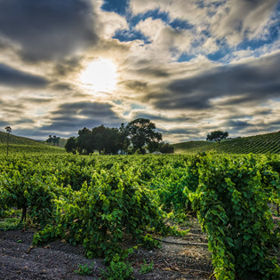 Niner Wine Estates, Paso Robles, California