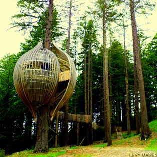 Redwood Treehouse, Warkworth, New Zealand