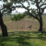 Scribe Winery, Sonoma, California