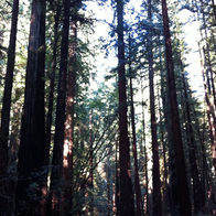 Armstrong Redwoods State Natural Reserve, Guerneville, California
