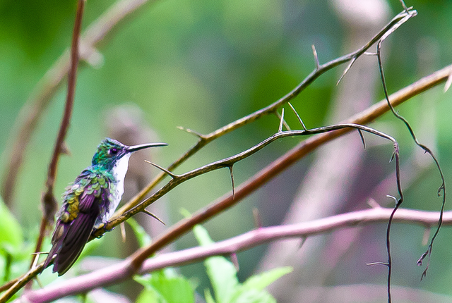 Hummingbird on a Branch | Yerette Hummingbird Sanctuary in ...