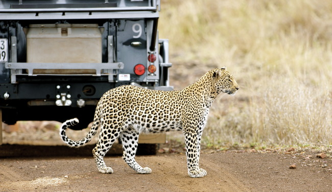 Singita, Sweni Lodge, Kruger Park, South Africa, Kruger Park, South Africa