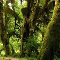 Olympic National Park, Port Angeles, Washington