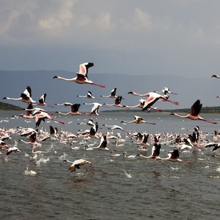Lake Baringo, Rift Valley, Kenya