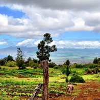 O'o Farm, Kula, Hawaii