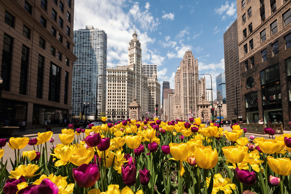 Stop and smell the flowers (or go to a baseball game, or see art, or hang out in the park) in Chicago this spring.